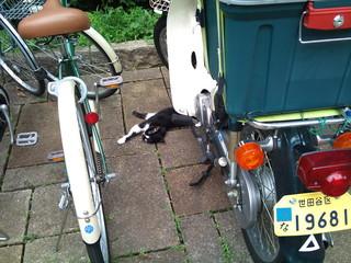 バイクの下で寝ている猫