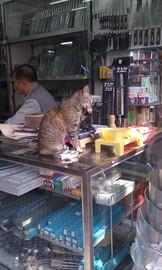 包丁屋の招き猫